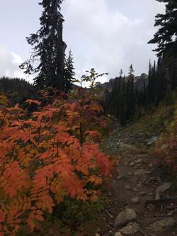 Eva Lake Trail