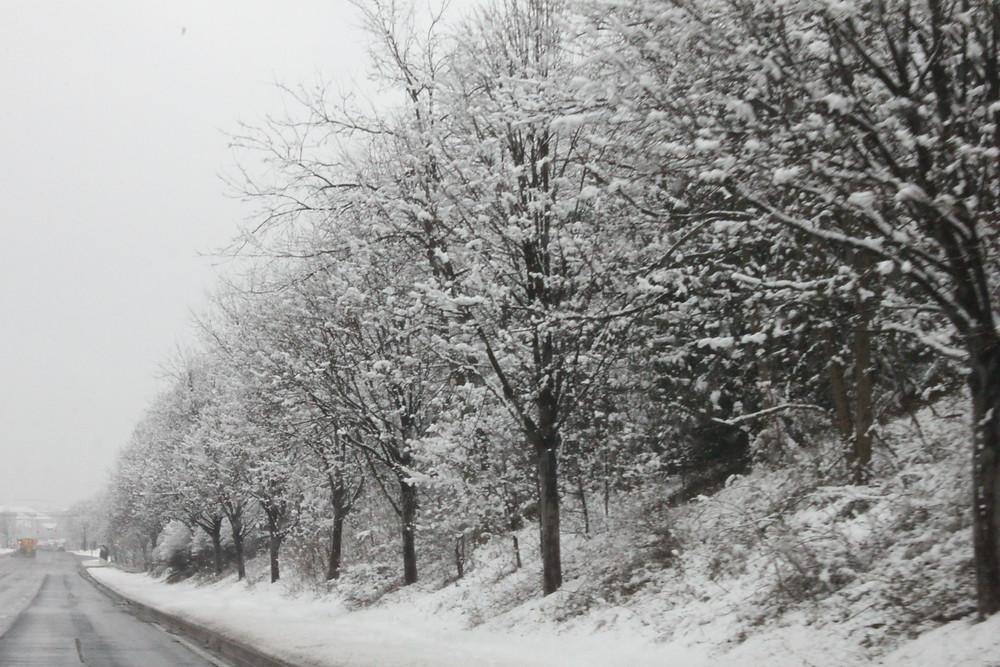 Snow Jan 21-59.JPG