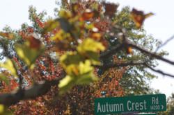 Autumn Crest Road