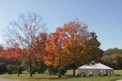 Blazing Tree at Seneca Lodge