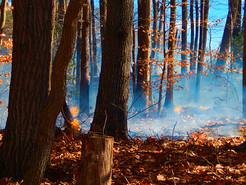 High Winds Spark Brush Fire in Boyds