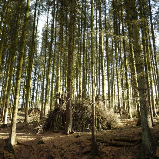 Mindful walks in the forest