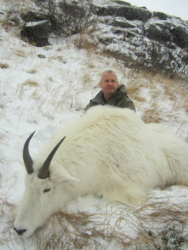 Clay Goldman's billy mountain goat.jpg