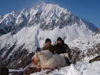 Shane Quinn's billy mountain goat.jpg