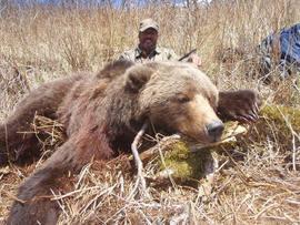 Gilbert Valdez's spring brown bear.jpg