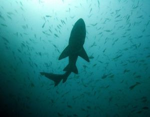 shark-infested waters: hiring a financial advisor, part 2