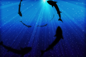 shark-infested waters: hiring a financial advisor, part 1