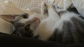 Cats: the four legged mystery