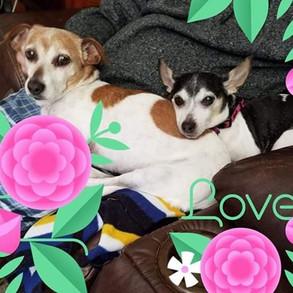 Love tilly and Rosa.jpg