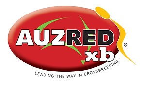Logo of AuzredXB