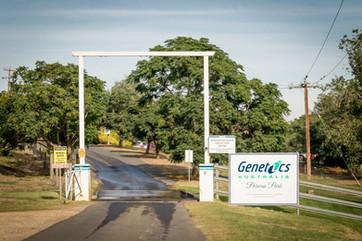 "Genetics Australia ""Parwan Park"""