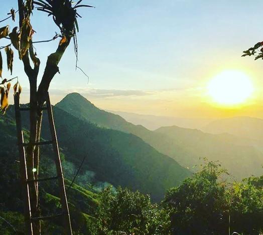 Alvarados Coffee - La Pena, Cundinamarca