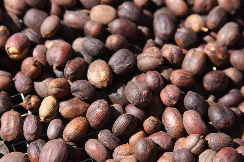 Natural Processed coffee