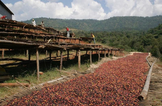 Coffee Drying bed in Ethiopia
