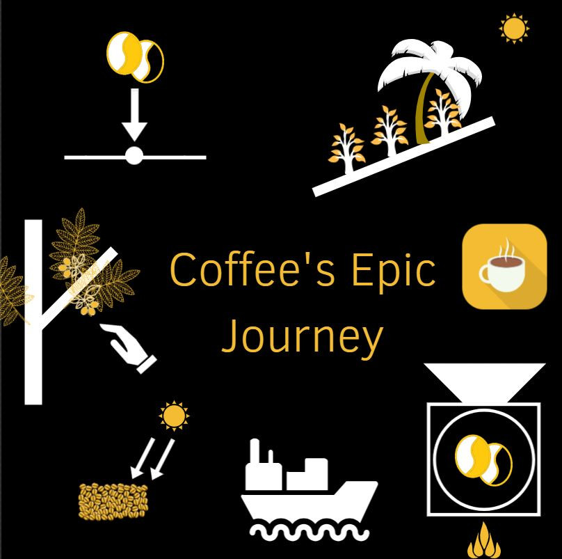 Coffee's Epic Journey From seed to cup