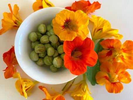 紐西蘭這種常見的花你吃過嗎?