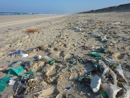 水中腸球菌超標 奧克蘭幾十個海灘禁止游泳