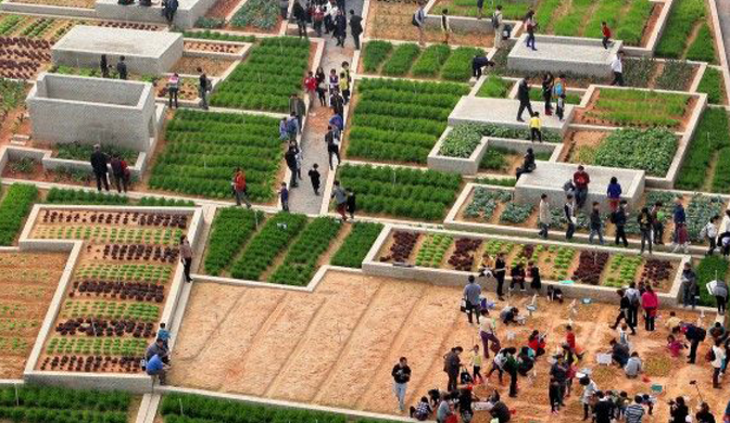 Urban Farming.PNG