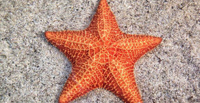 Sea Star fun Facts