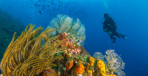 Discover Scuba Diving at the Liberty WRECK