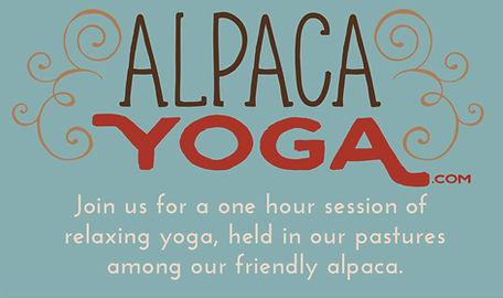 Island Alpaca Yoga Logo.jpg