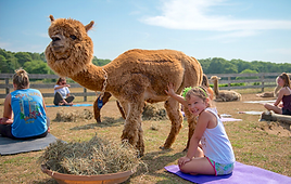 Island Alpaca Yoga 2019 GIRL and Cassiel