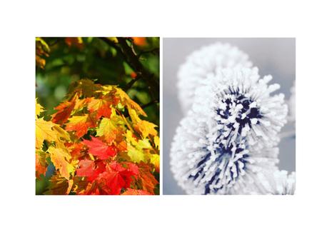 Vous êtes allergiques aux pollens et désirez profiter pleinement du printemps 2018 ?