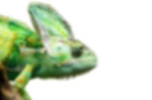 reptile-png-5.png
