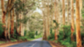 caves-road-MARGARETRIVER1216.jpg