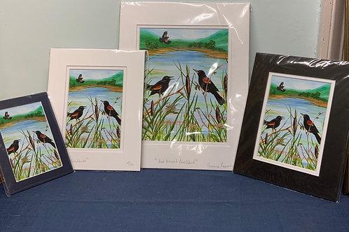 Red Winged Blackbird prints