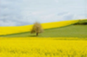 Get help. Professional hypnotherapy in Yorkshire