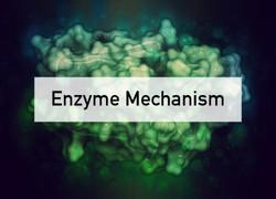 Enzyme Mechanism