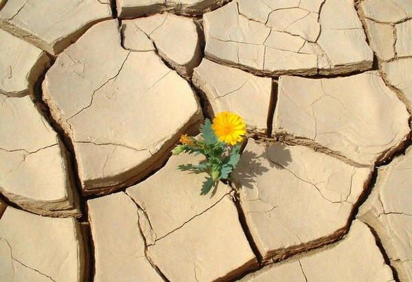 L'adversité : victoire ou défaite ?
