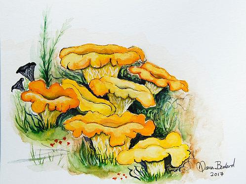 Golden Chanterelles & Black Trumpets