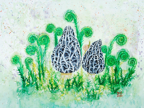 Fiddlehead Ferns & Morels