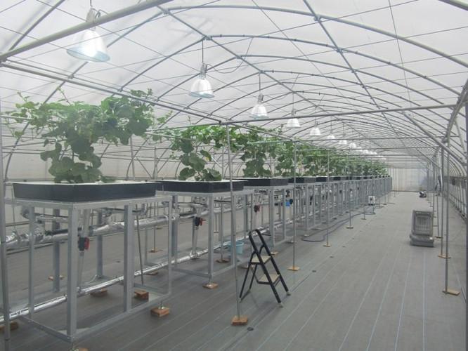 メロン栽培