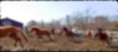 たくさんの走る馬たち