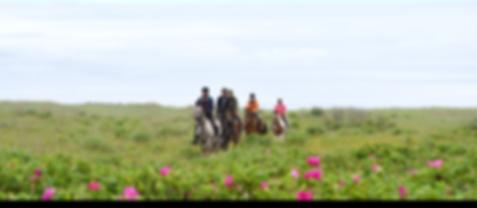 春の気持ちいい草原の上で乗馬