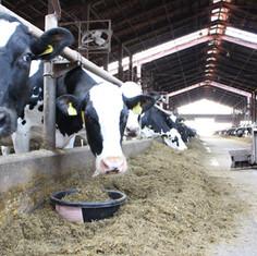 本牛舎2.JPG