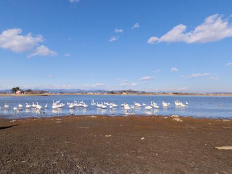 おススメバス釣りスポット:群馬県館林市「多々良沼」
