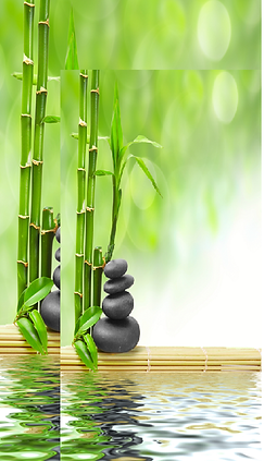 BambooWithRocks.png