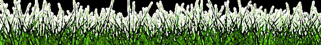 GRASS_2-removebg-preview ENHANCED WATERC