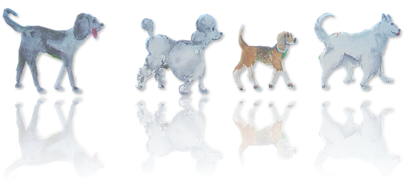 4 dogs.png