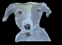 dog gray 1.png