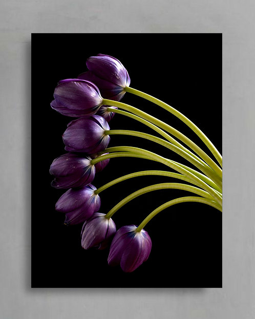 Purple Tulips ~ Moody Floral Artwork therandomimage.com