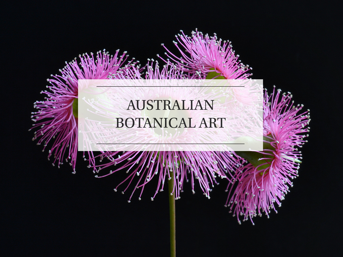 AUSTRALIAN BOTANICAL ART