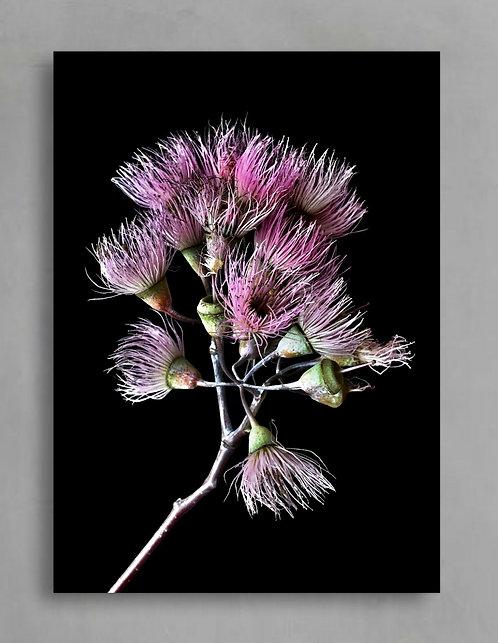 Pink Gum Blossoms ~ Australian Floral Artwork therandomimage.com