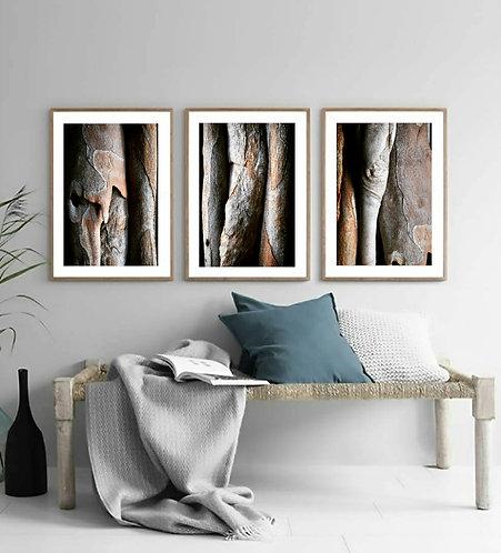 tree bark triptych set of 3 still life photography print Nadia culph therandomimage.com