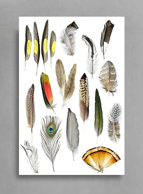 Printable Feather Collage Artwork ~ Downloadable Photography Print ~ Digital Download therandomimage.com