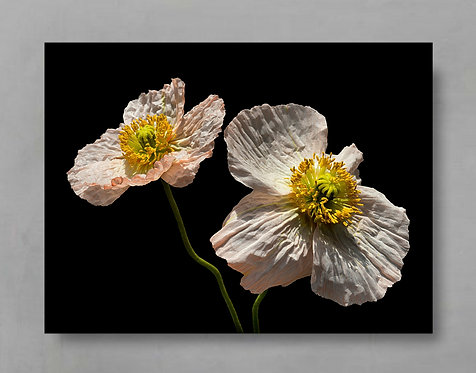 Two Pink Poppies ~ Flower Photography Print therandomimage.com